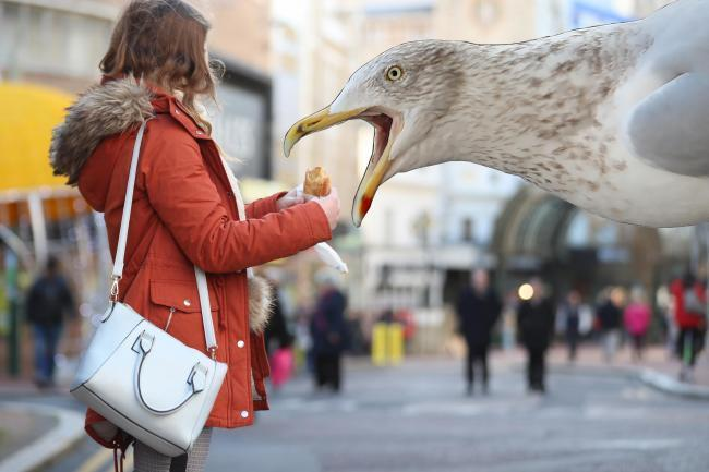Stare at seagulls to stop them eating your food, study finds
