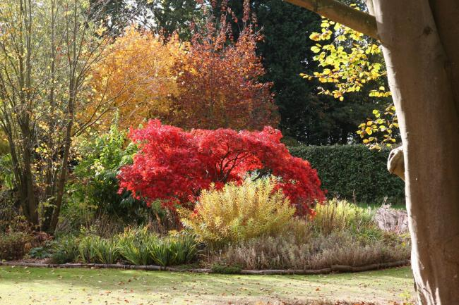 GREEN GARDENS: All sorts of trees and shrubs can be admired