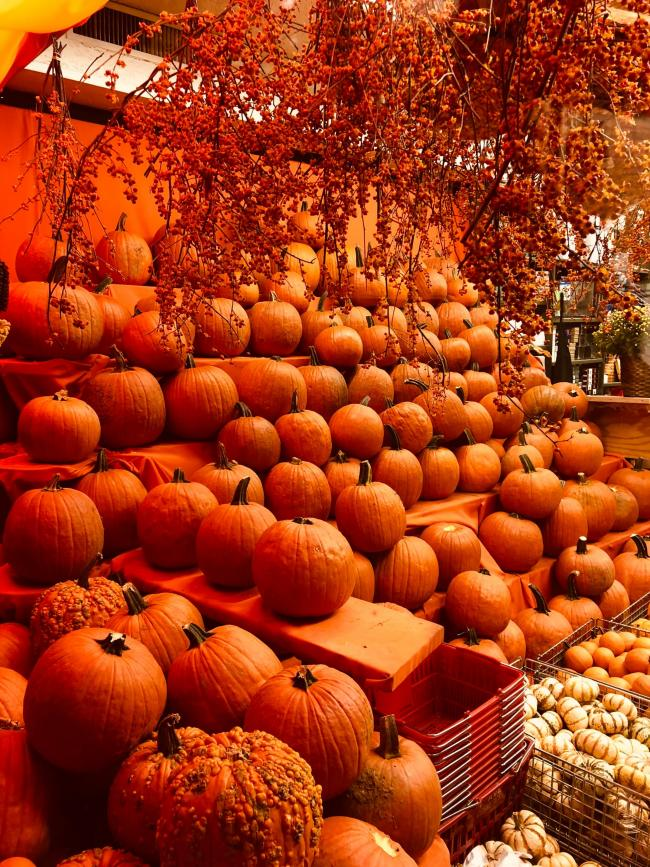 The best PYO pumpkin patches in and around Southend - have you been yet?