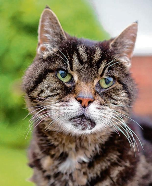 Halstead Gazette: Billy is one of Halstead's oldest cats.