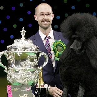 Two-year-old standard poodle Ricky with his handler Jason Lynn, after winning the world's most prestigious dog show prize