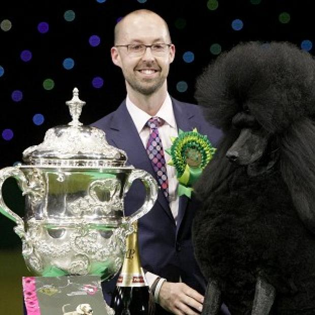 Halstead Gazette: Two-year-old standard poodle Ricky with his handler Jason Lynn, after winning the world's most prestigious dog show prize