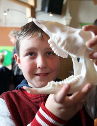 Museum science and fossil day hailed a success