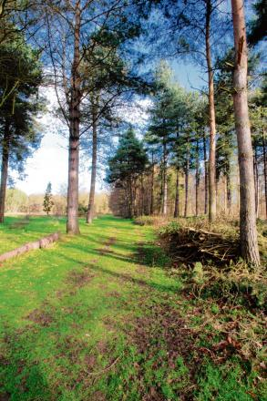 The Marks Hall Estate has donated land to Honywood School