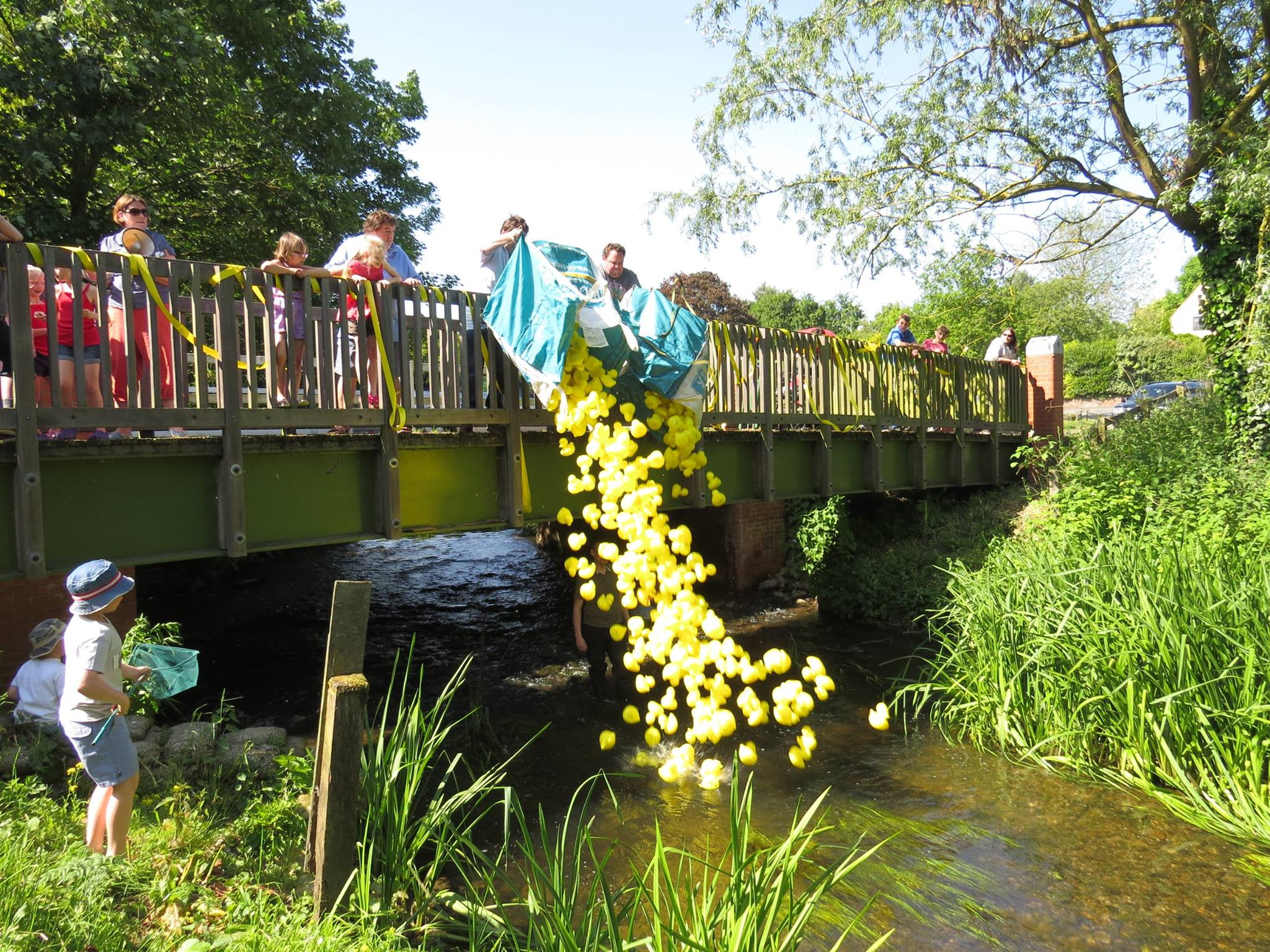 Chappel duck race raises a 'quacking' £1568