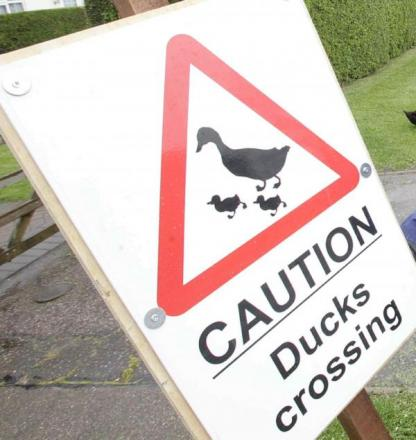 Julie Winters is concerned about ducks crossing Trinity Street