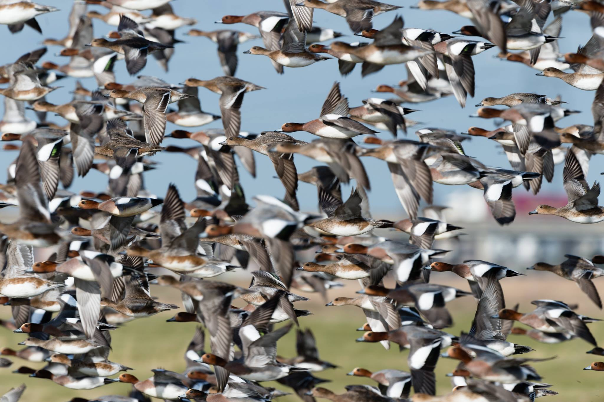 Winterwatch: Wonderful Waders and Wildfowl... A drop in workshop