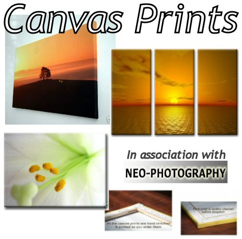 Halstead Gazette: Canvas Prints