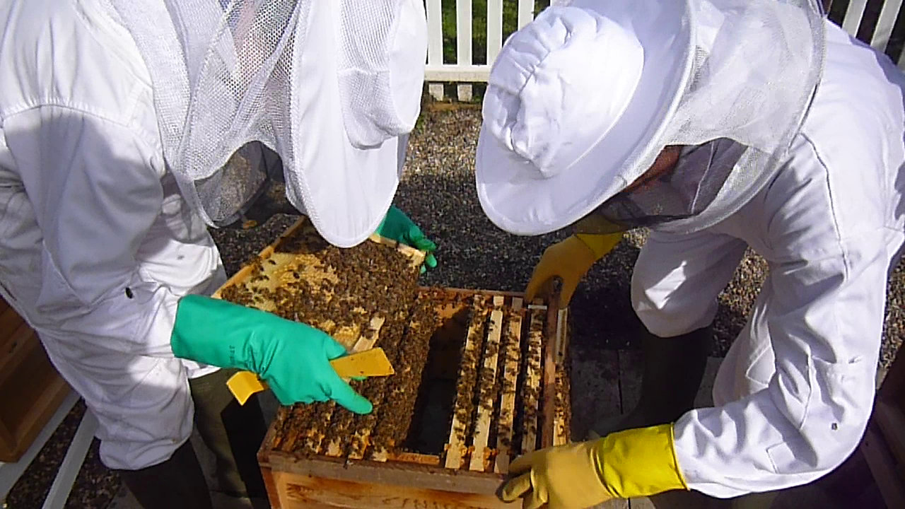 Chelmsford Beekeepers Theory Course