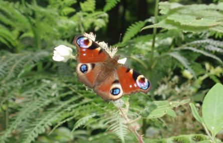 Some butterfly favourites and where to find them