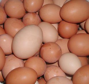 Halstead Gazette: Shopkeepers ban youngsters from buying eggs