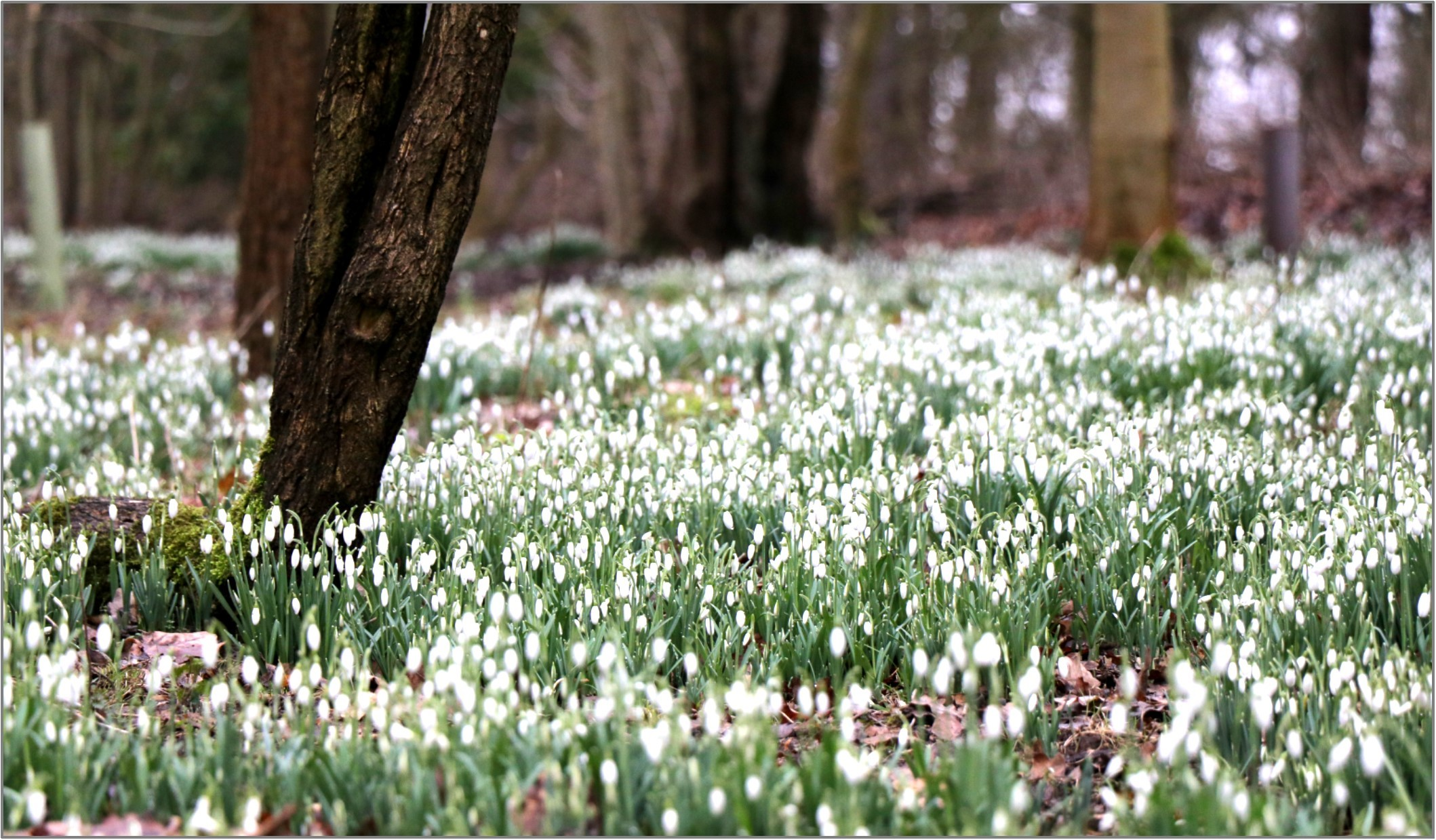 SNOW DROPS: A relaxing way to spend the afternoon